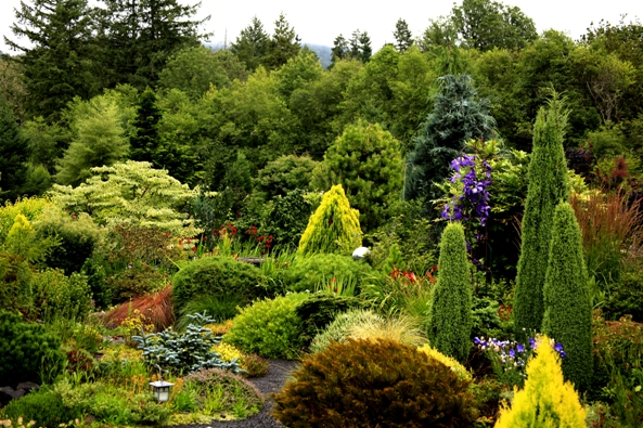Image Gallery Evergreen Conifers