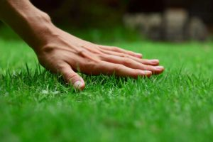 hand-on-lawn2